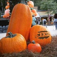 Pumpkin Festival at Stone Mountain Park