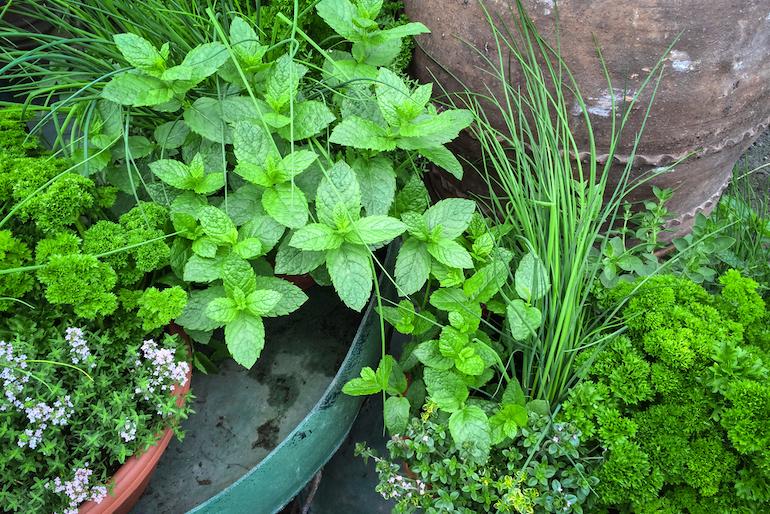 Master Gardener Talk, Plant and Garden Book Sale