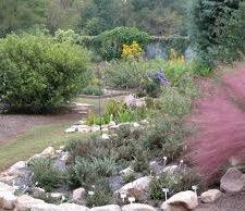 June Master Gardener Talk