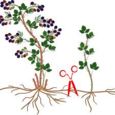Free Master Gardener Talk - Propagating Plants